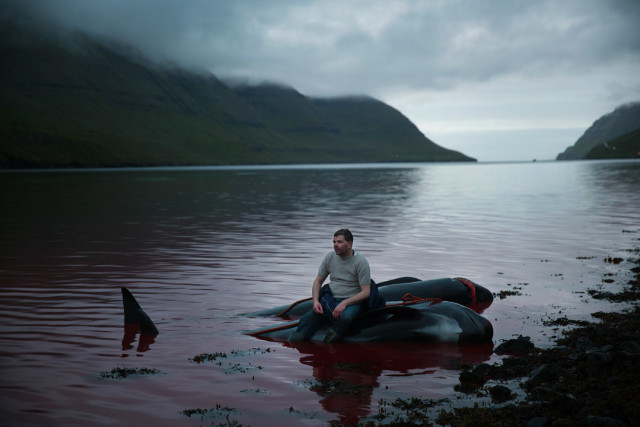 Froðí Lassen is resting on a slaughtered whale after a long evening with whaling in the little village of Hvannasund in the Faroe Islands. Foto: Andrea Gjestvang
